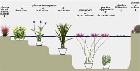 plante de bassin exterieur vanille d eau ou aponogeton distachyos plante de bassin