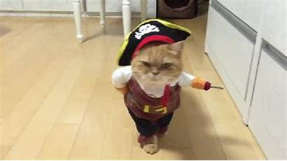 Pirate Cat Pissed Face Costume Dressed Halloween