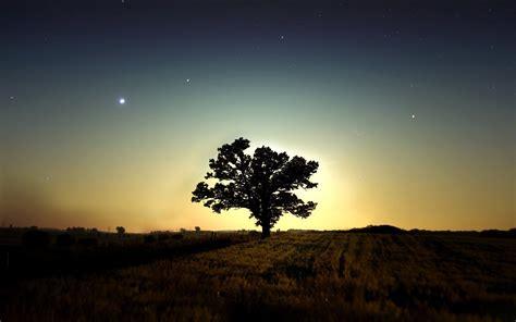 Nature, Trees, Sky, Field, Night, Long Exposure, Stars