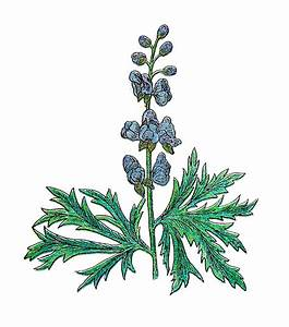 Herb 20clipart