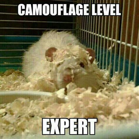 Rodent Meme - 45 best rat memes images on pinterest rats funny pets and fancy rat