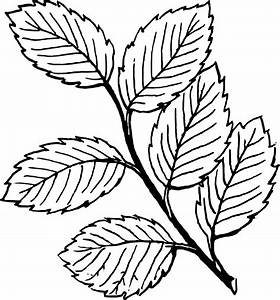 Line Drawings Of Leaves - ClipArt Best