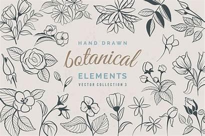 Drawn Hand Botanical Elements Illustrations Vector Flower