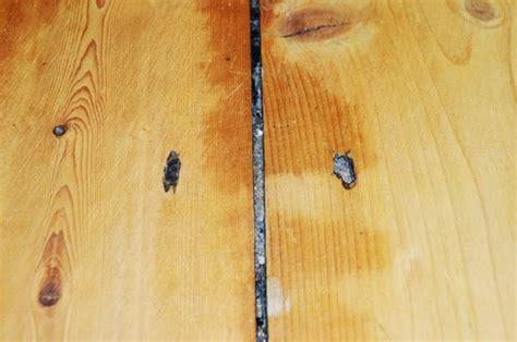 hardwood floors and fleas 5 reasons you have fleas