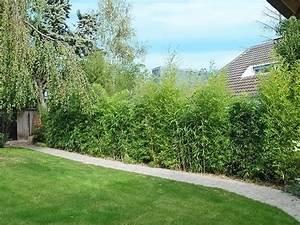 pinterest o le catalogue d39idees With idee amenagement jardin paysager 1 haie de bambous une idee de plus en plus seduisante