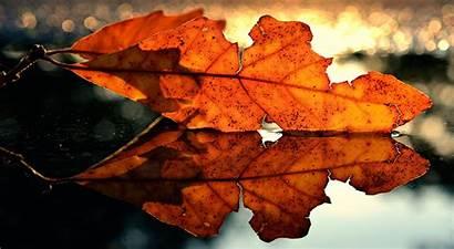 Foliage Closeup Autumn Nature 1280