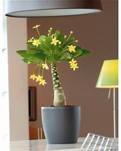 Plante D Intérieur Haute : achat vente de plantes d 39 int rieur rares en ligne ~ Premium-room.com Idées de Décoration