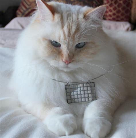 diy projects   cat fur