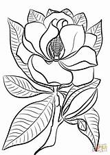 Tegninger Kolorowanka Dalie Ispirazione Farvelægning Supercoloring Drukuj sketch template