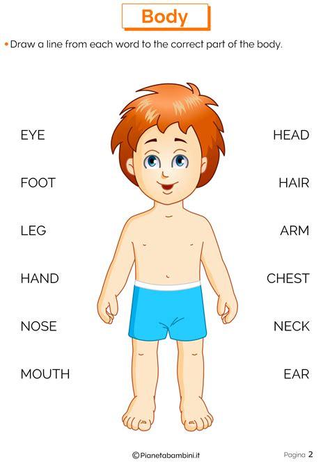 amazing schede didattiche sul corpo umano scuola primaria oz66 pineglen
