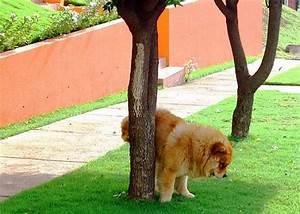 Hund Im Haus : wie verhindert man dass rueden ihr revier im haus ~ Lizthompson.info Haus und Dekorationen