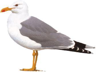 Uccello Simile Al Gabbiano - gabbiani brotture