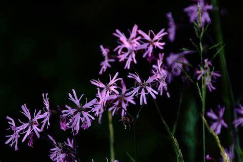 tuin zonder giftige planten pas op giftige planten soorten in de tuin