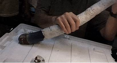 Shipworm Giant Shipworms Found Magnificent Heavier Scientists