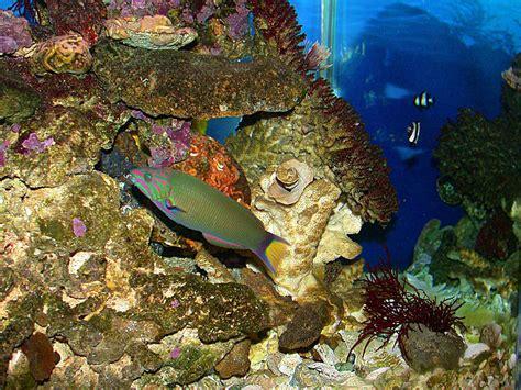 fish wallpaper tropical fish wallpapers wallpaper cave Tropical
