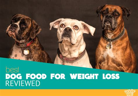 top  highest rated dog foods  weight loss reviewed