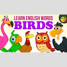 Birds  Pre School  Learn English Words (spelling) Video For Kids And Toddlers Youtube