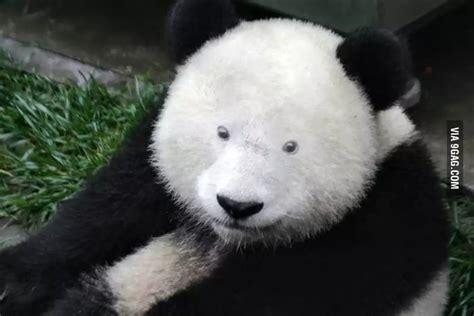Panda Mascara Meme - panda makeup meme mugeek vidalondon