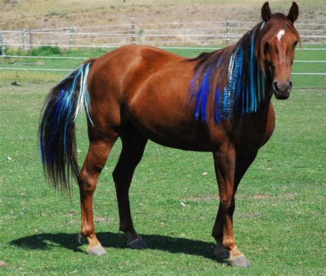 horse tack pony dye horses hair colors thinline presented coloring colorful mane food manes nation edition don dont decide ok