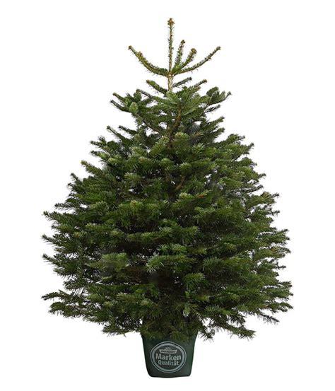 Tannenbaum Mit Ballen Kaufen by Weihnachtsbaum Liefern Bremen Frohe Weihnachten In Europa