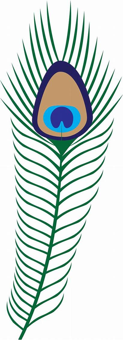Peacock Feather Clip Clipart Hera Gatsby Feathers