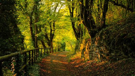 Forest Animated Wallpaper - forrest tree forest animated wallpaper background