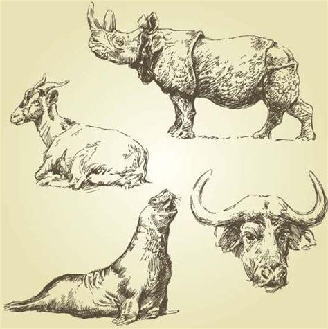wild animal drawings  vector