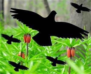 Tattoo Folie Selbstklebend : set vogel fenster aufkleber bilder folien wandtattoo ~ Michelbontemps.com Haus und Dekorationen