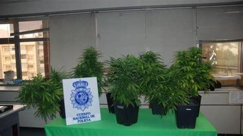 Detenido por cultivar cannabis en su casa del Barranquillo ...