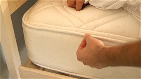 prevent bed bugs indoor pests ortho