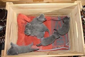 Haus Auf Russisch : russisch blau von malyschka russisch blau kitten ~ Articles-book.com Haus und Dekorationen