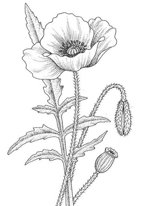 printable poppy coloring pages