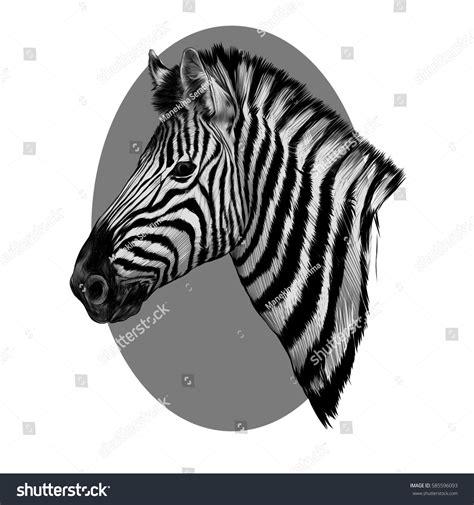 Zebra Head Profile Sketch Vector Grey Stock Vector