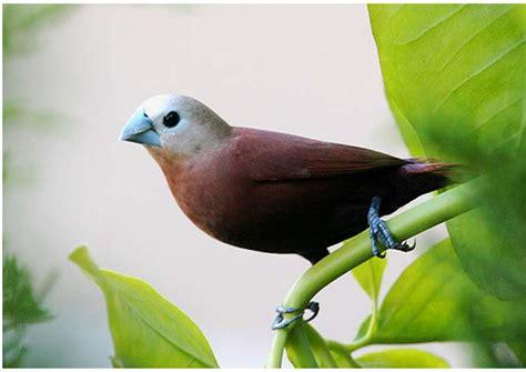Burung cendrawasih ini merupakan burung yang langka. Gambar Burung yang Langka dan Keterangan Singkat ~ SENI BUDAYA