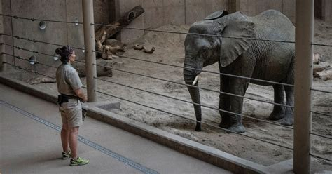 zoos elephants zoo york schwartz omaha henry magazine called rescue times doorly why charles robin credit