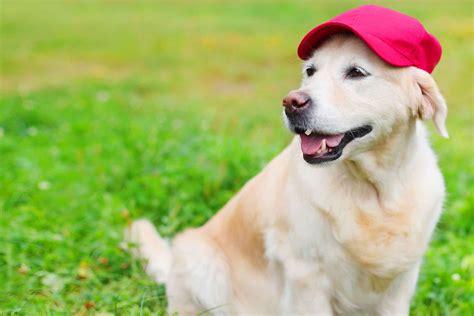 baseball related dog names popular male  female names