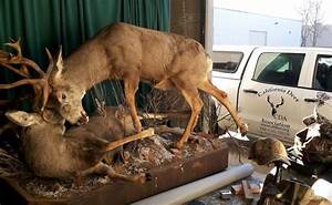 Awesome Deer Mounts Legendary Whitetails