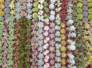 Succulentes Pas Cher : d tails du produit 20 plantes succulentes arr es succulentes 35 20plantes fleurs ~ Melissatoandfro.com Idées de Décoration