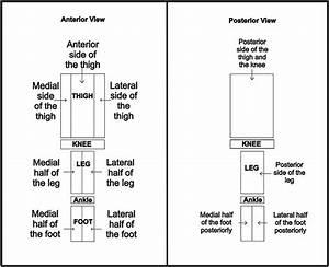 Dermatomes Of Lower Limb  Detailed Anatomy