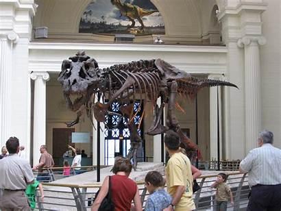 Sue Field Chicago Museum Visit Trex Illinois