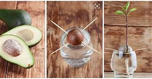 Melone Selber Ziehen : avocado selber ziehen so geht 39 s eat smarter ~ Frokenaadalensverden.com Haus und Dekorationen