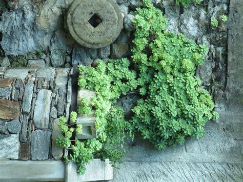 Kübelpflanzen Winterhart Immergrün Sonnig by K 252 Belpflanzen Winterhart Immergr 252 N Sonnig Wohn Design
