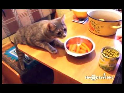 cats stealing food neatorama