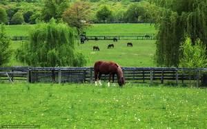 Horses in Springtime Wallpaper - WallpaperSafari