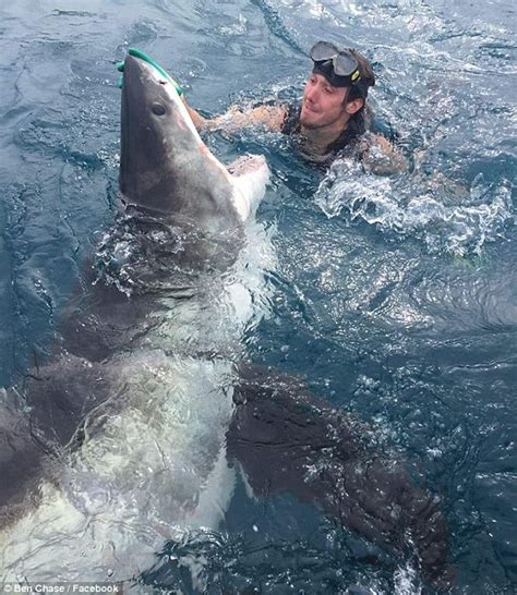 Perth Diver Grabs Great White Shark By Nose To Sedate It