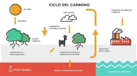 El Ciclo Del Carbono Youtube
