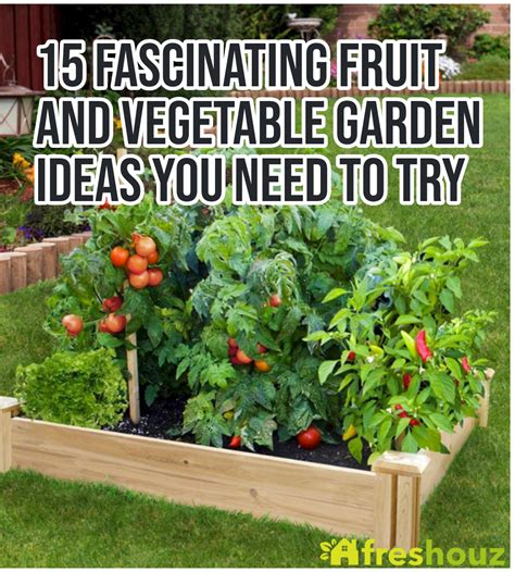 fascinating fruit  vegetable garden ideas