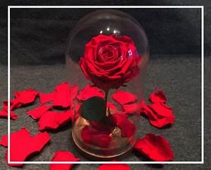 Rose Eternelle Sous Cloche : rose ternelle naturelle sous cloche roses eternelles ~ Farleysfitness.com Idées de Décoration
