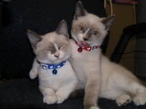 friends of cats cat buddies 2 1funny