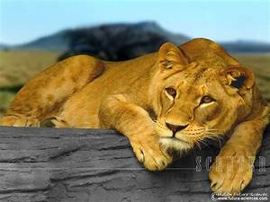 fond d39ecran scruter With plan de maison original 14 fond decran lion blanc